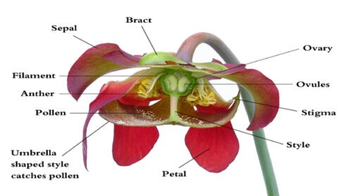 image of Parts of flowers