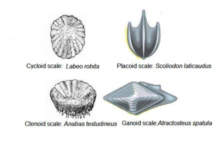 image of scale types