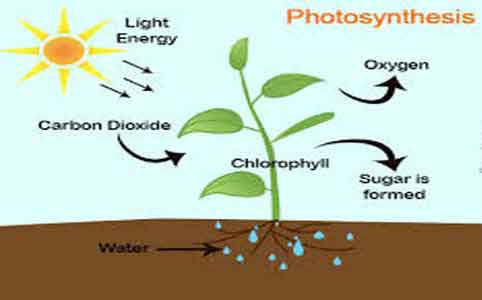 Photosynthesis: Definition, Process and Its Significance | Biology ...