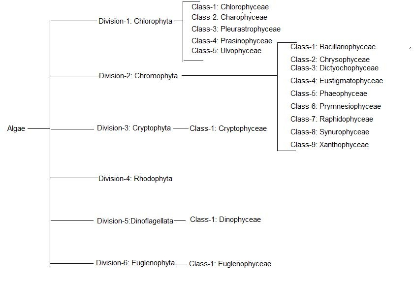 image of Algae classification at a glance