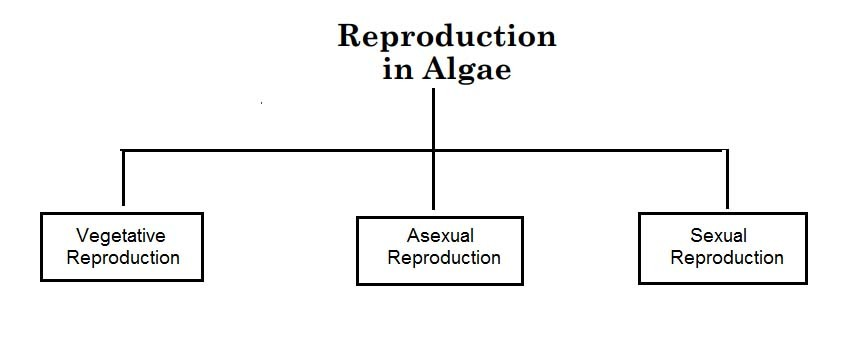image of Reproduction types in Algae