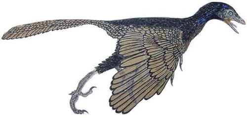 image of Archaeopteryx lithographica