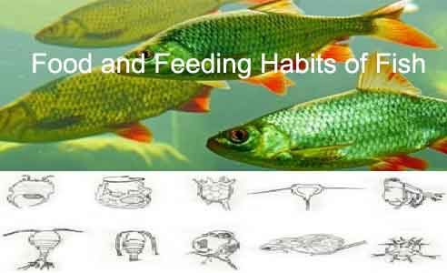 image of ood and Feeding Habits of Fish