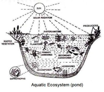 image of Aquatic ecosystem