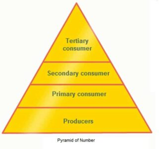 image of Pyramid of Number