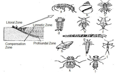 image of Benthos of litoral-zone