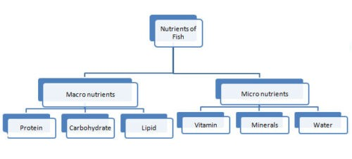 image of Fish nutrients types