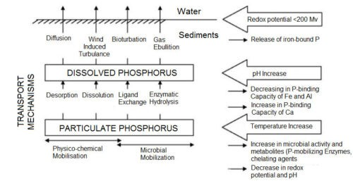 image of Factors and Processes of Phosphorus Release from Sediment