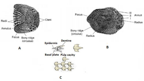 Different Parts of scales